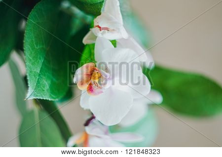 Sweet Color Orchid In Soft And Blur Style For Background