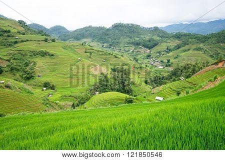 Beautiful green rice field terraced in Mu Cang Chai Vietnam