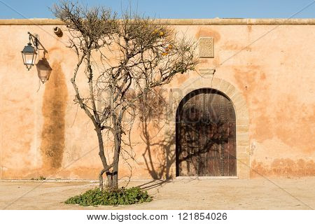 tree and its shadow on the wall of the ancient Kasbah Les Oudaias in Rabat, Morocco