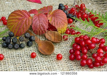 red berries of viburnum ,mountain ash, and black raspberry leaf