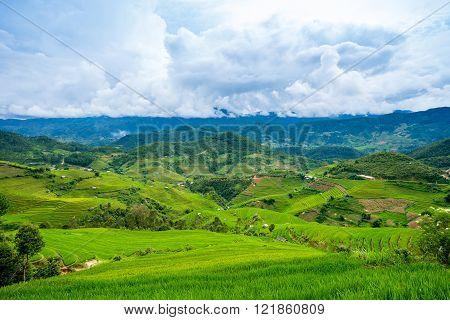 Beautiful green rice field terraces in Mu Cang Chai Vietnam
