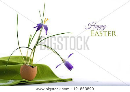happy easter greeting card delicate blue crocus flowers planted in an eggshell on a green napkin white background with sample text close up selected focus depth of field