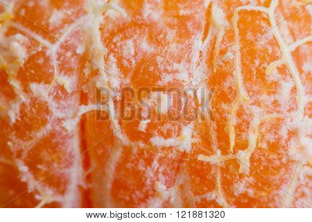 macro of a small orange as an organic texture background