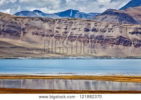 Tso Kar - fluctuating salt lake in Himalayas. Rapshu,  Ladakh, Jammu and Kashmir, India