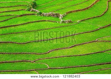 Rice field terraces near Sapa village, Vietnam