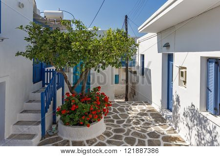 Typical street and flowers in town of Parakia, Paros island, Cyclades, Greece