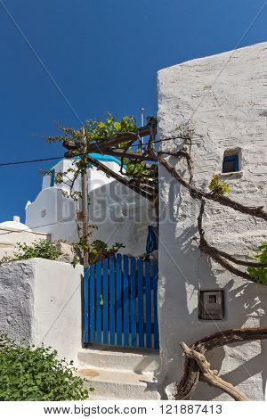 White chuch and vine in town of Parakia, Paros island, Cyclades, Greece
