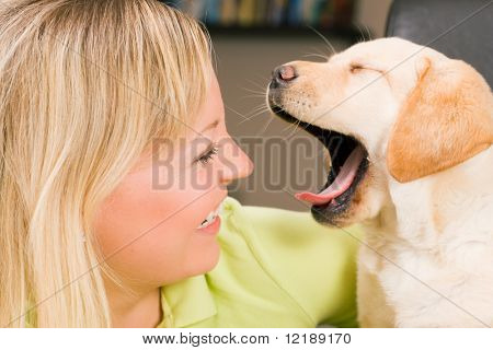 Cute Labrador Retriever puppy yawning at his mom
