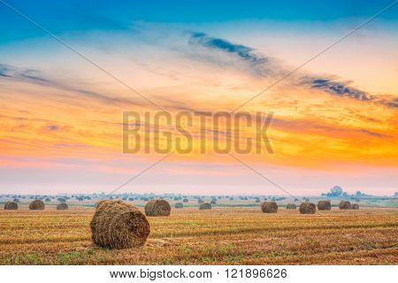 Rural Field Meadow With Hay Bales After Harvest in Sunny Day in
