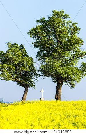trees and cross with rape field, Czech Republic