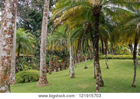 Tropical garden in Martinique, garden of Balata