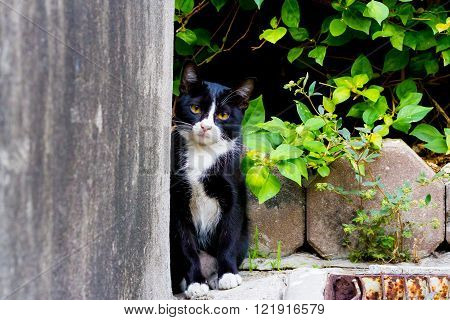 cute little cat peeking out and look form the niche glimpse with a curious expression.