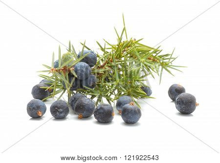 Common Juniper (Juniperus communis) fruits on white