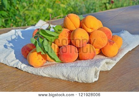 Ripe Apricots On Green Background.