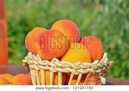 Ripe  Fresh Apricots