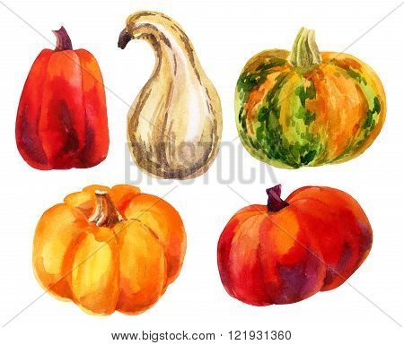 Pumpkin set. Watercolor pumpkins. Hand drawn illustration isolated on white background.