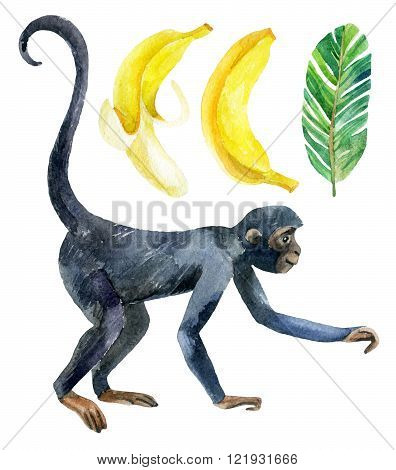 Monkey and banana isolated on white background. A cute monkey and exotic fruits. Watercolor hand painted illustration