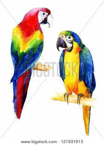 Watercolor illustration of two parrots isolated on white background