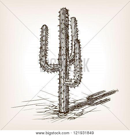 Cactus sketch style vector illustration. Old engraving imitation. Cactus hand drawn sketch imitation