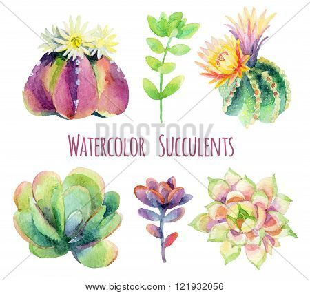 Watercolor succulents set isolated on white background. Hand painted raster illustration