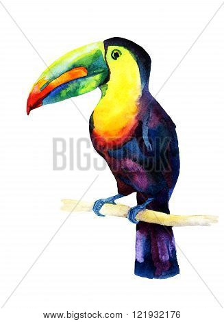 Watercolor toucan bird sitting on a branch isolated on white background. Raster illustration
