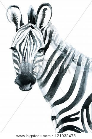 Watercolor zebra isolated on white background raster illustration
