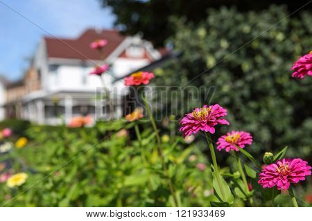 Background image of garden flowers in a small town, with a house in the background.