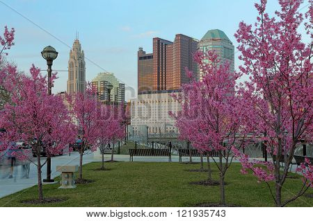 Red buds in bloom along the Scioto River and Columbus Ohio skyline at John W. Galbreath Bicentennial Park at dusk