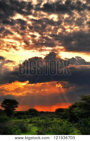 Dramatic stormy sunset under jungle in central Namibia Waterberg region. Namibia Africa