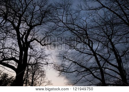 Eerie Trees with spooky and ominous atmosphere