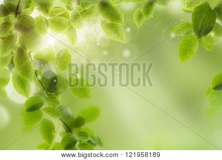 Fresh Spring bokeh background