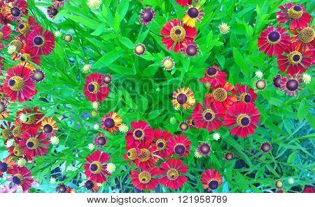 The orange spray flowers on long stems