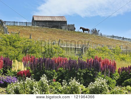 barn with standing horse mear it and flowers in garden