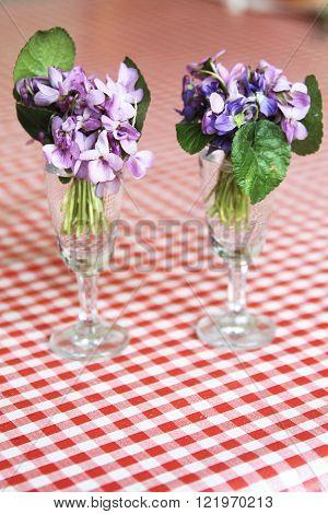 Viola Odorata  As Sweet Violet, English Violet, Common Violet, Or Garden Violet. Swallow Depth Of Fi