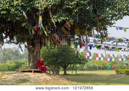 Monk sitting under a tree in Lumbini, Nepal