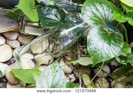 Empty Bottles Store Stagnant Water And Breeding Ground For Mosquito
