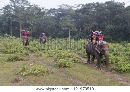 Tourist on an elephant safari in Chitwan National Park, Nepal