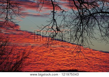 A blaze of color in the winter sky ** Note: Shallow depth of field