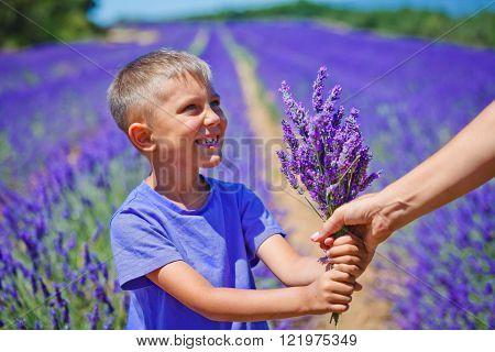 Little boy in lavender field