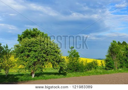 Countryside landscape with yellow rapeseed field. Sunny day