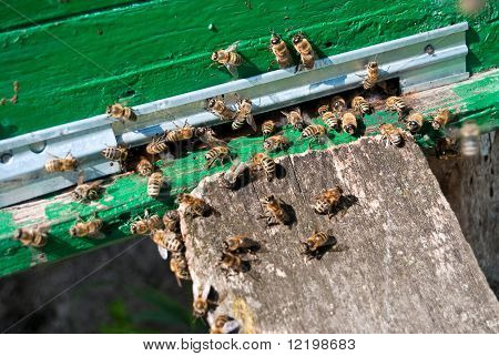 Bienenstock und Bienen