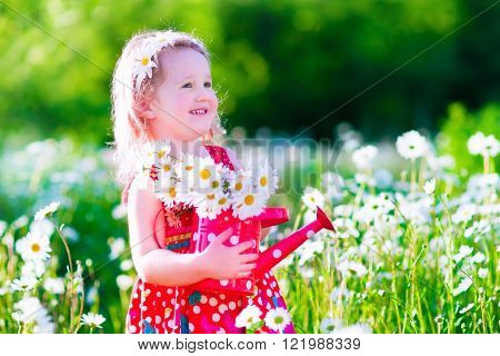 Kid gardening. Little girl with water can in a daisy flower field. Children playing in the backyard with flowers. Child working in the garden with beautiful daisies picking fresh flowers. Outdoor summer fun for family with kids.