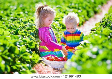Children pick strawberries. Toddler kid and baby eat ripe healthy berry. 