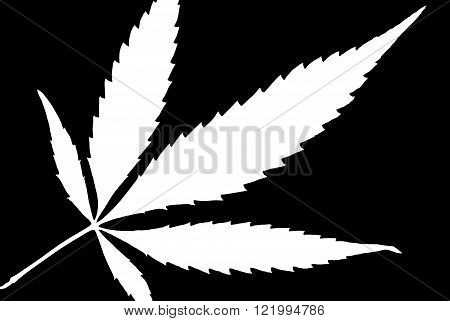 A high contrast weed leaf designed in black and white.
