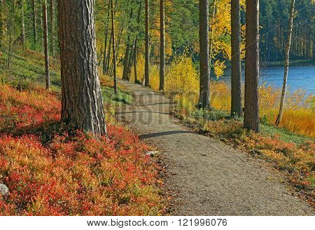beautifil fall colors in the finnish taiga