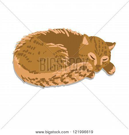 Ginger sleeping cat isolated on white background