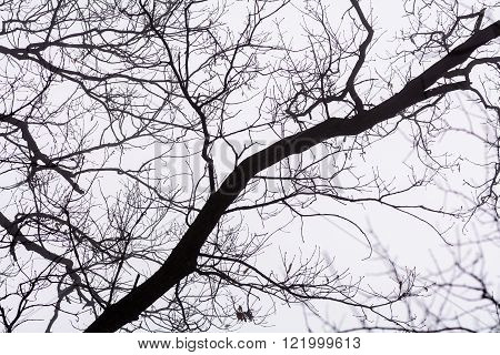 Isolated branches over white background. Black bare tree branches peaking sky on white frozen background.