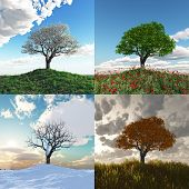 foto of seasonal tree  - lonely tree at four seasons time lapse - JPG