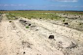 image of disafforestation  - stubs on the place of perished forest