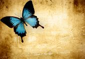 stock photo of blue butterfly  - Blue butterfly on parchment background - JPG